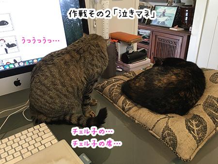 13092018_cat2.jpg