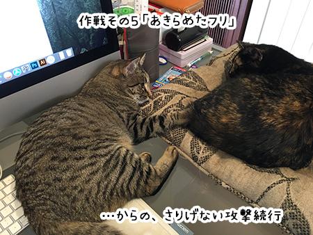 13092018_cat6B.jpg