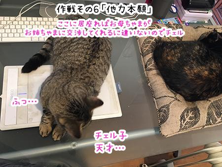 13092018_cat7B.jpg