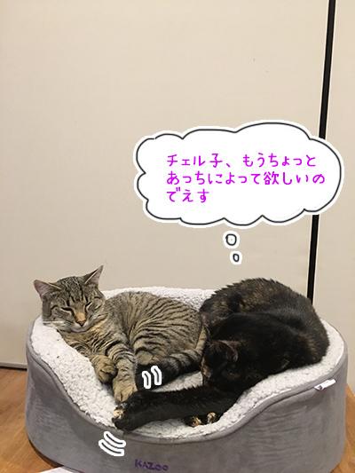 14082018_cat1.jpg