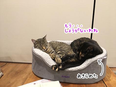 14082018_cat2.jpg