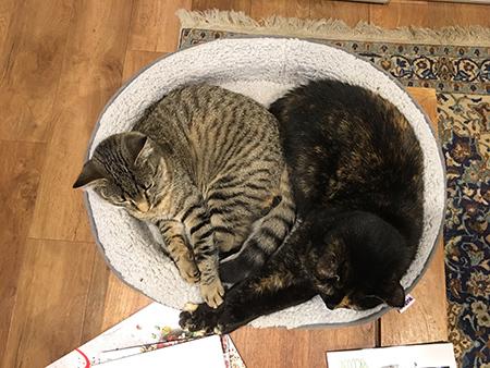 14082018_cat3.jpg