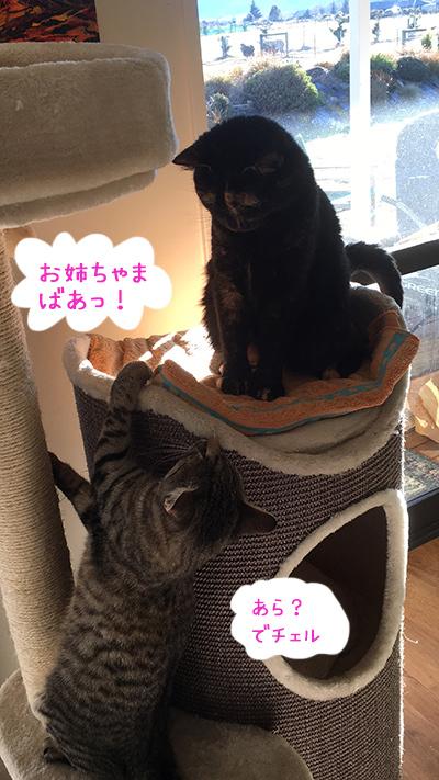 17072018_cat2.jpg