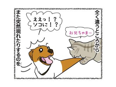 17092018_cat2.jpg