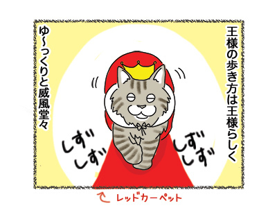 19072018_cat1.jpg