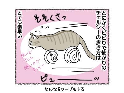 19072018_cat2.jpg