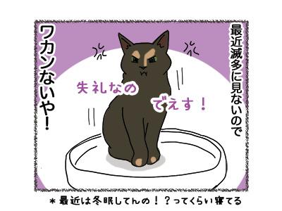 19072018_cat4.jpg