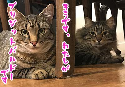 20092018_cat4.jpg
