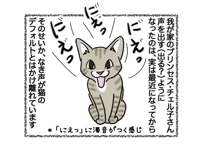 21082018_cat1.jpg
