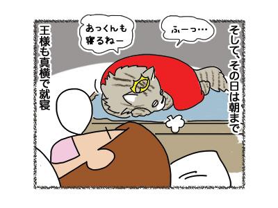 21092018_cat4.jpg