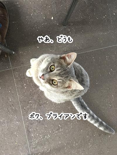 22072018_cat1.jpg