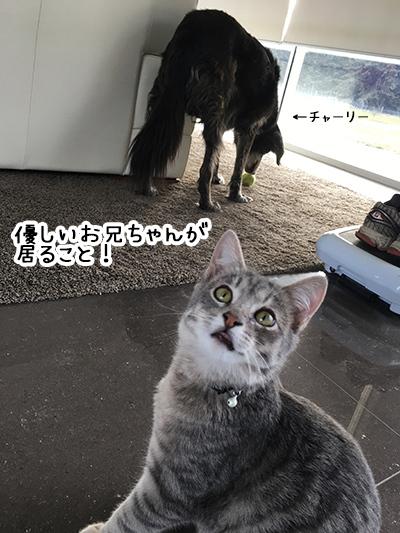 22072018_cat2.jpg