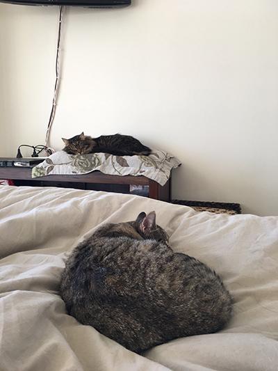 22082018_cat2.jpg