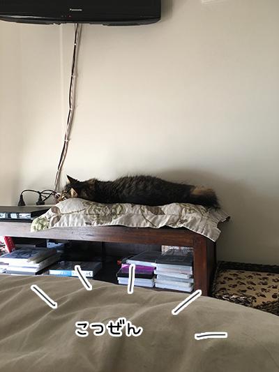 22082018_cat3.jpg