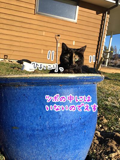 22082018_cat5.jpg