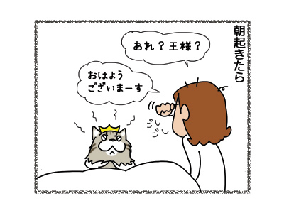 23082018_cat1.jpg
