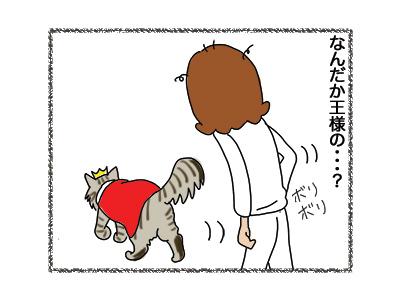 23082018_cat2.jpg