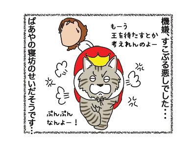 23082018_cat4.jpg