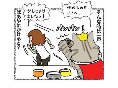 24072018_cat2.jpg