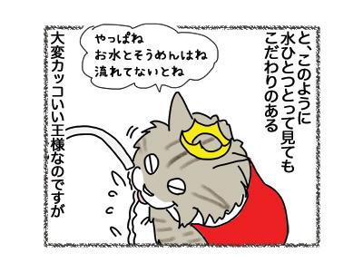 24072018_cat4.jpg