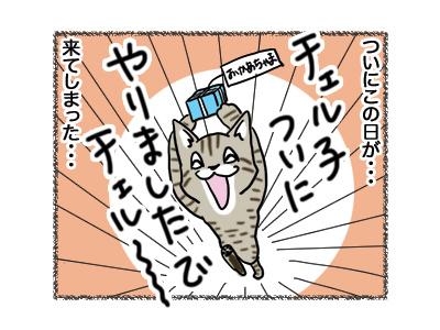 24082018_cat2.jpg