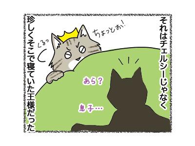 25092018_cat4.jpg