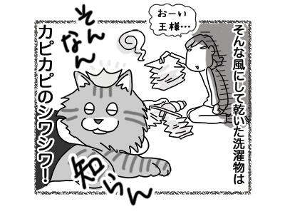 26072018_cat5.jpg
