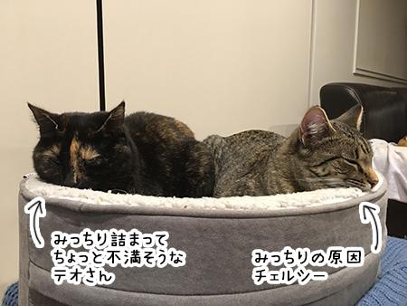 26092018_cat1.jpg