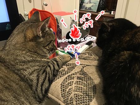 26092018_cat2.jpg