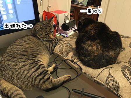 26092018_cat5.jpg