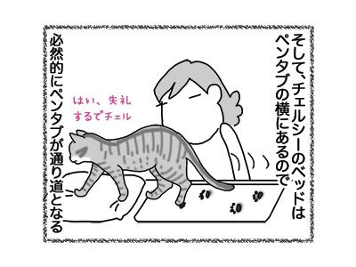 27072018_cat2.jpg