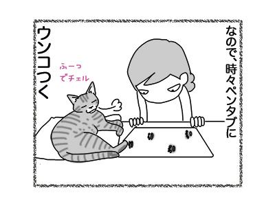 27072018_cat3.jpg
