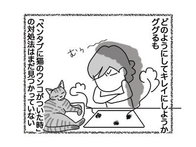 27072018_cat4.jpg