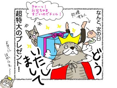 27082018_cat4.jpg