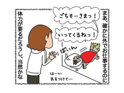 27092018_cat2.jpg