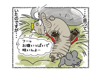 27092018_cat3.jpg