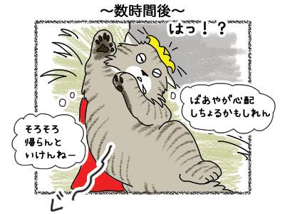 27092018_cat4.jpg
