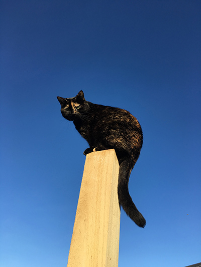 28082018_cat4.jpg