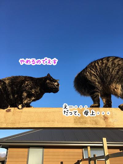 29082018_cat1.jpg