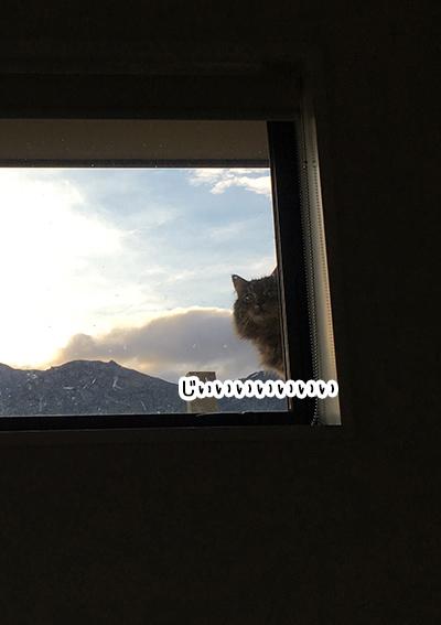 29082018_cat3.jpg