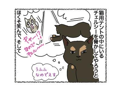 30072018_cat2.jpg