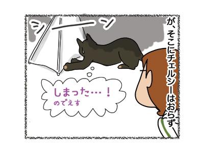 30072018_cat4.jpg