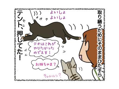 30072018_cat5.jpg