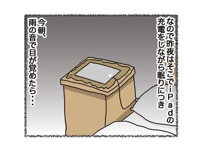 31072018_cat3.jpg