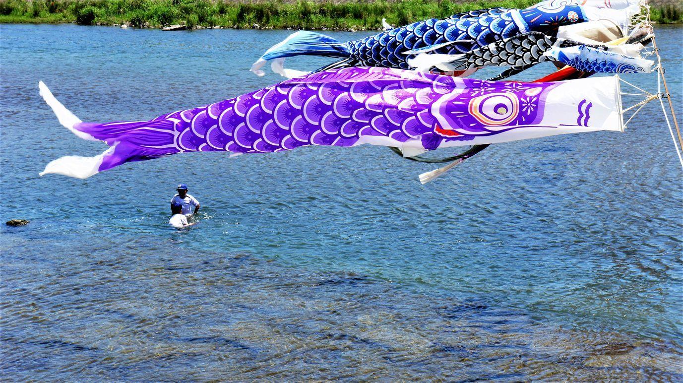 ⑦水遊びと鯉のぼり