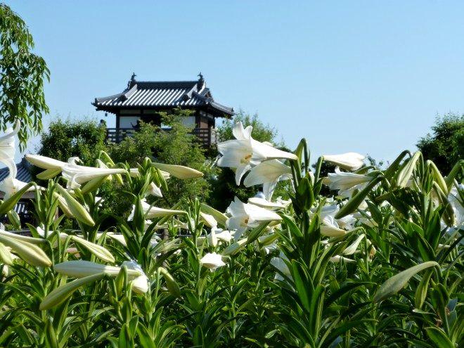 池田城跡公園の白ゆり