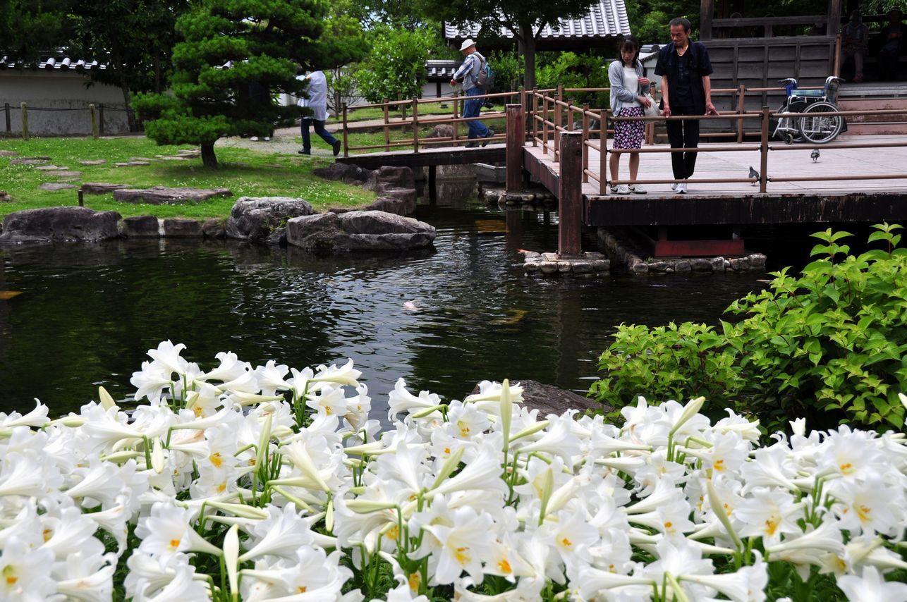 ⑥池とゆり