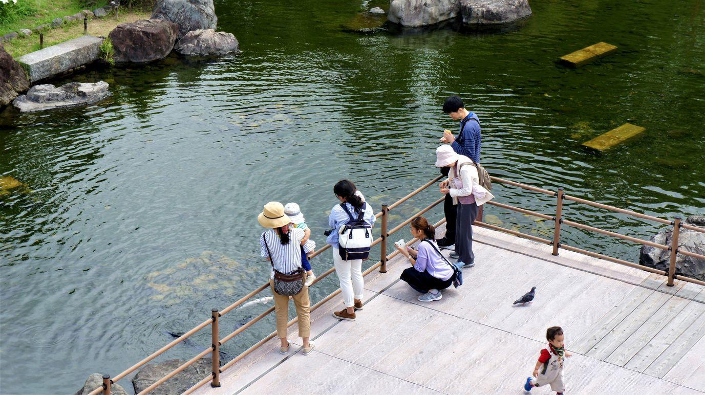 ⑧池の鯉を覗く人