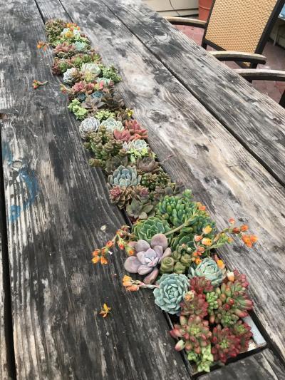 Seafood Restaurant Succulents