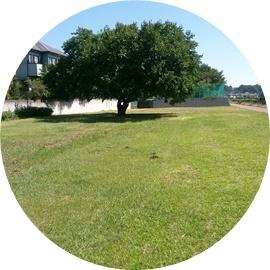5 日陰のできる桑の木 (1)